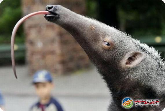 世界上15种最奇特的动物|宠物家族