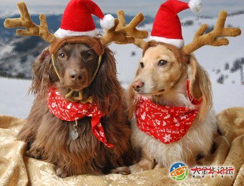可爱的动物们也来过圣诞|宠物家族
