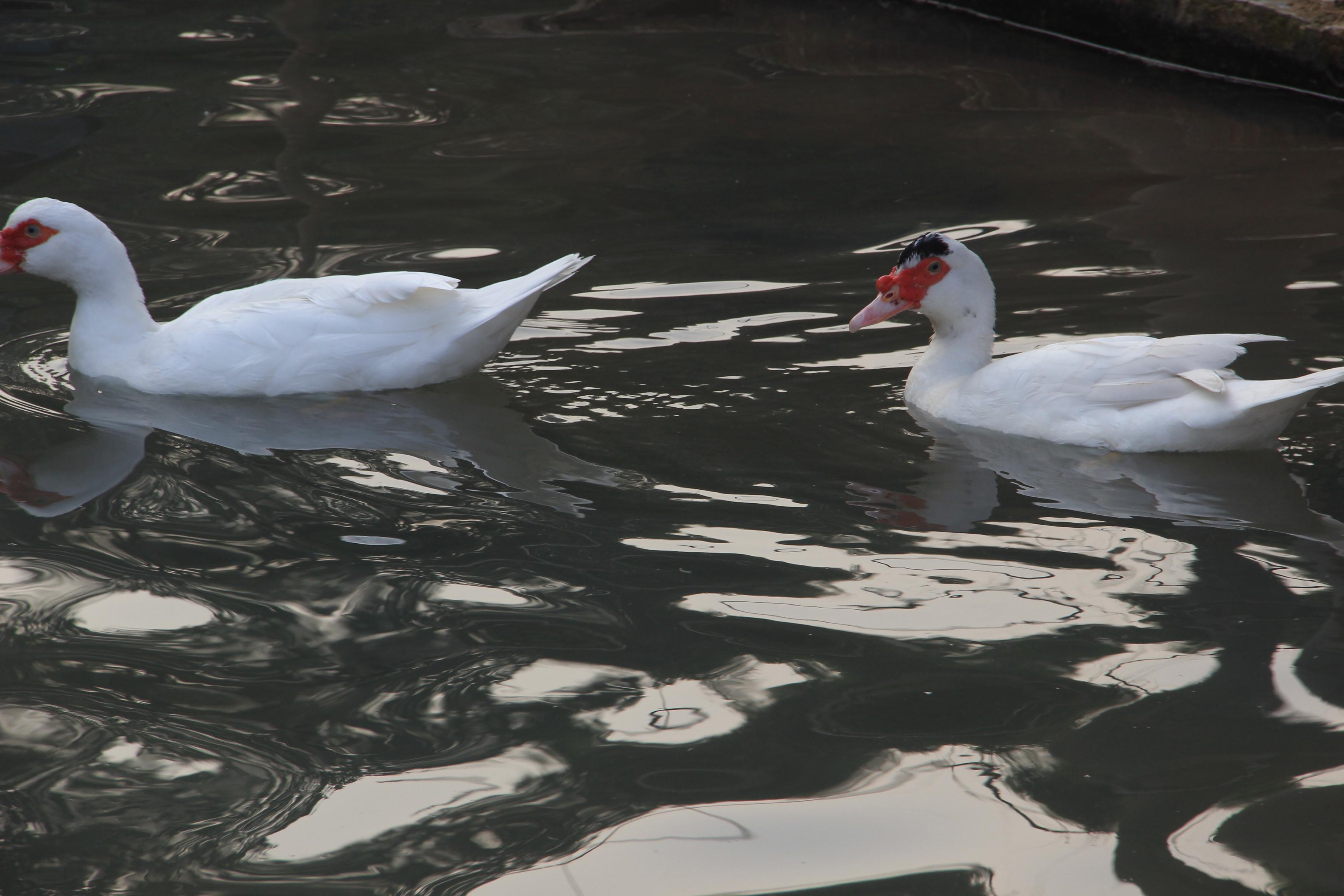 水和鸭 摄友汇分会