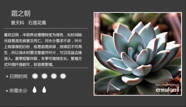 多肉植物图鉴——景天科石莲花属