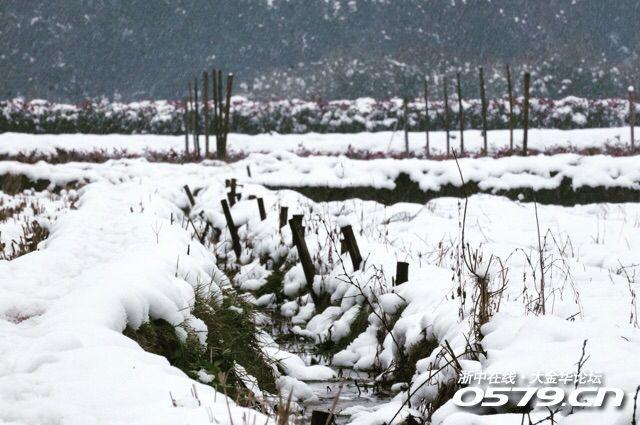 微信头像雪景农村