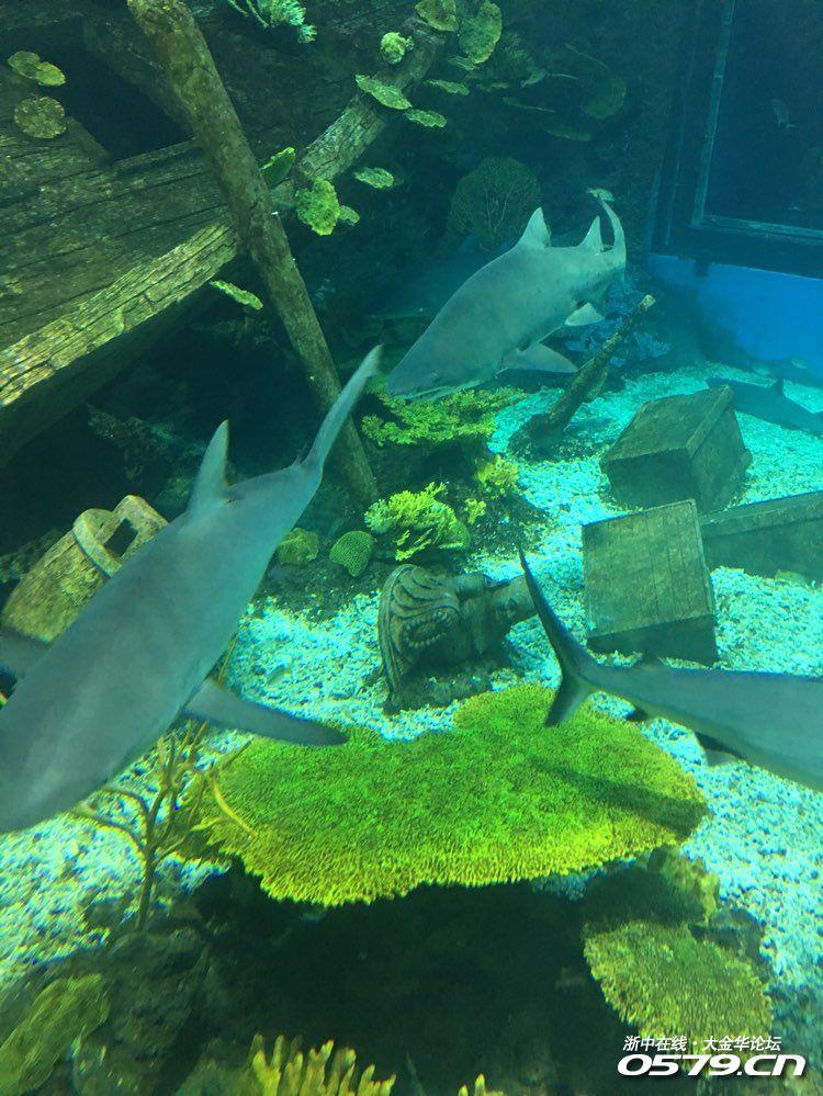 壁纸 海底 海底世界 海洋馆 水族馆 桌面 750_999 竖版 竖屏 手机